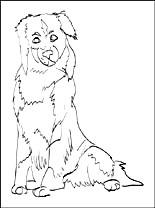 Australian Shepherd coloring #13, Download drawings