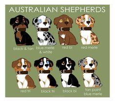 Australian Shepherd coloring #17, Download drawings