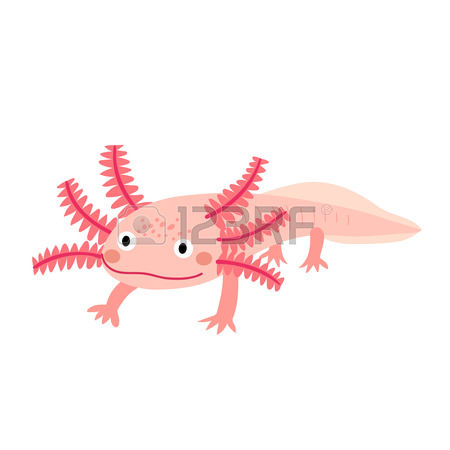 Axolotl clipart #7, Download drawings