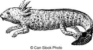 Axolotl clipart #15, Download drawings