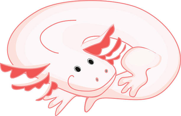 Axolotl clipart #6, Download drawings