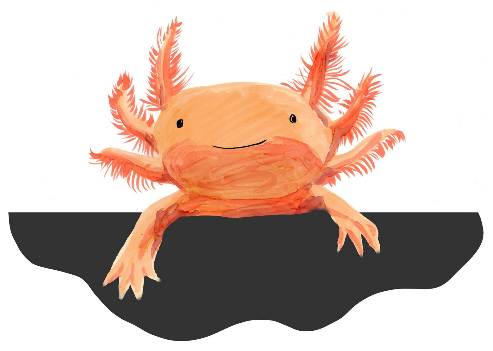 Axolotl clipart #2, Download drawings