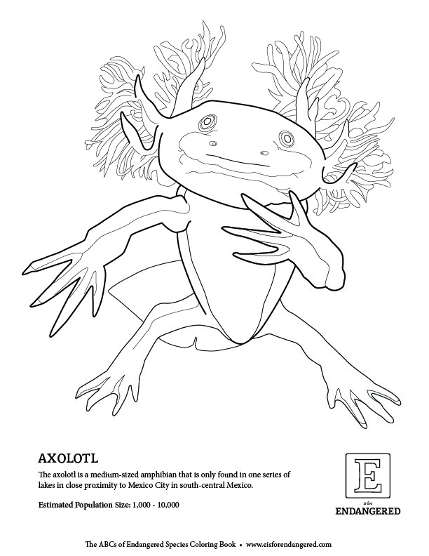 axolotl coloring pages - photo#7