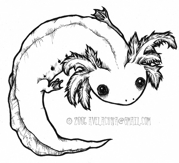 axolotl coloring pages - photo#2