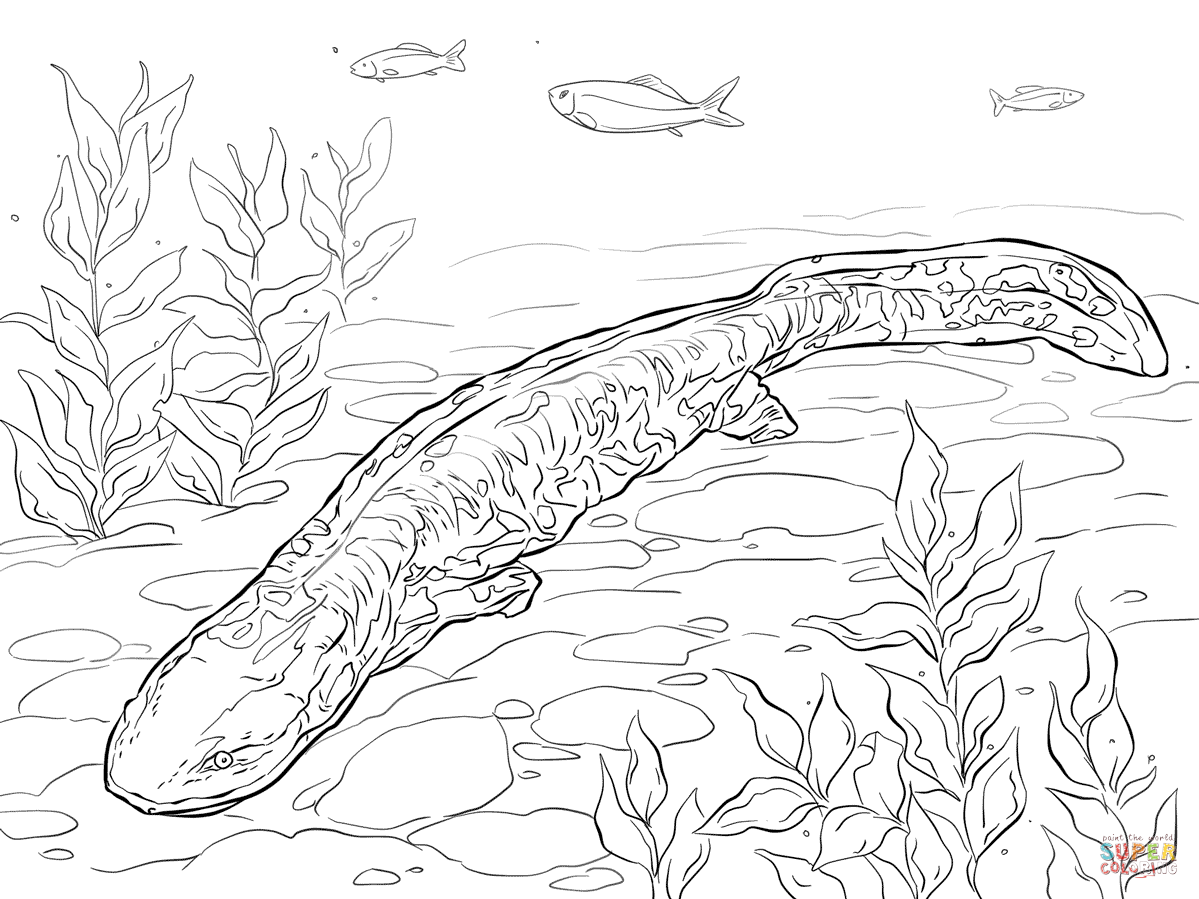 axolotl coloring pages - photo#15