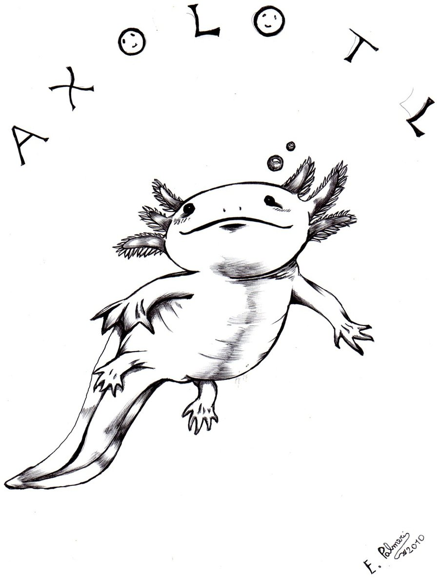 axolotl coloring pages - photo#6