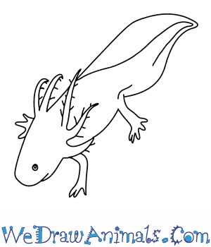 axolotl coloring pages - photo#17