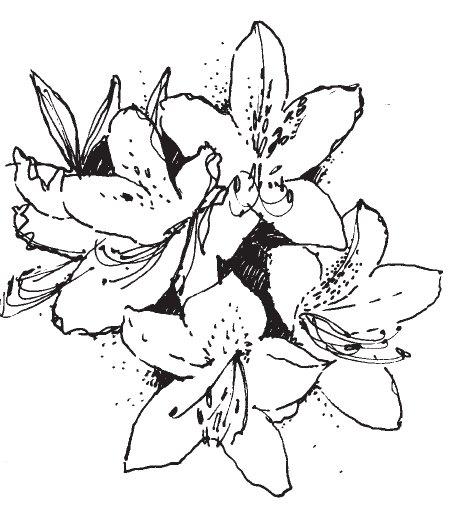 Azalea clipart #3, Download drawings