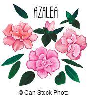 Azalea clipart #18, Download drawings