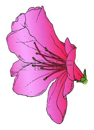 Azalea clipart #14, Download drawings