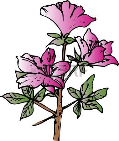 Azalea clipart #9, Download drawings