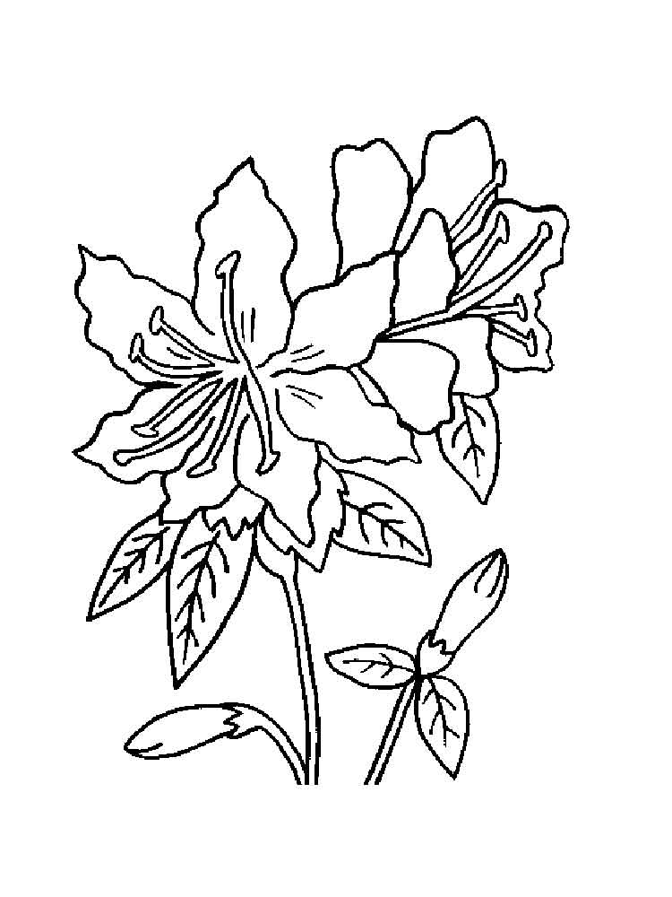 Azalea Coloring Download Azalea Coloring For Free 2019