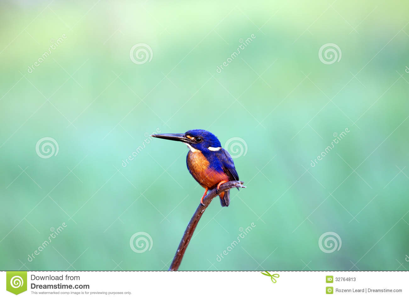Azure Kingfisher clipart #19, Download drawings