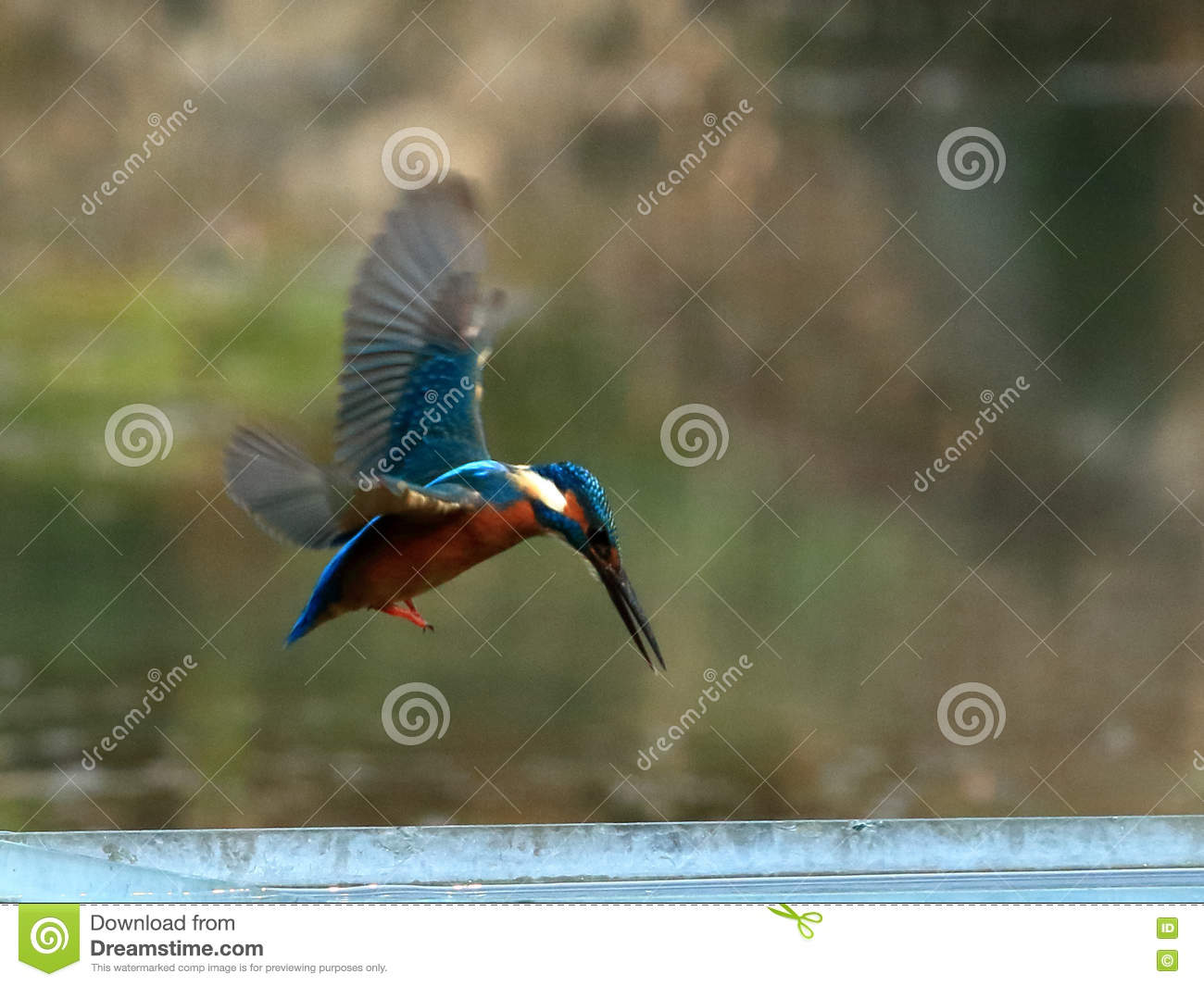 Azure Kingfisher clipart #16, Download drawings