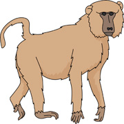 Baboon clipart #20, Download drawings