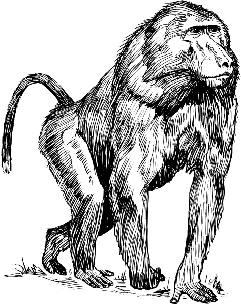 Baboon clipart #13, Download drawings