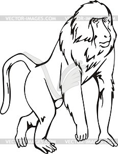 Baboon clipart #7, Download drawings