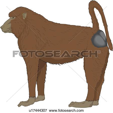 Baboon clipart #10, Download drawings