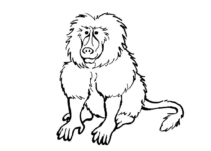 Baboon coloring #5, Download drawings