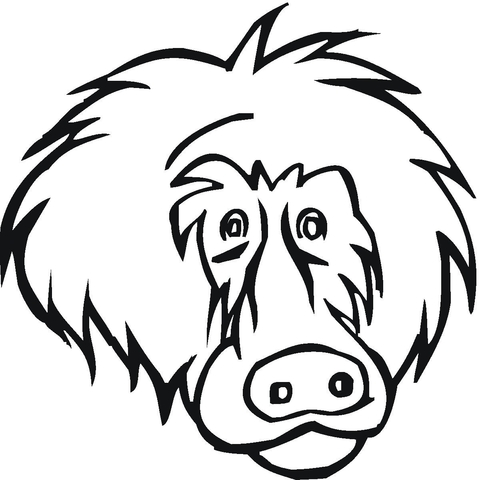 Baboon coloring #19, Download drawings