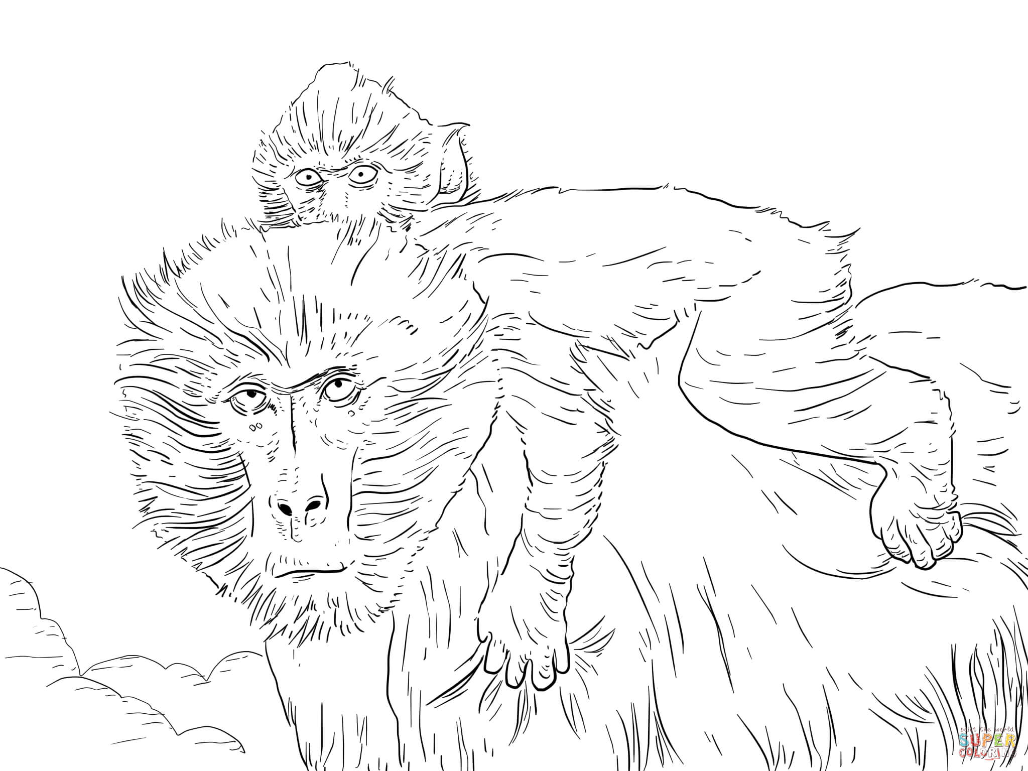 Baboon coloring #15, Download drawings