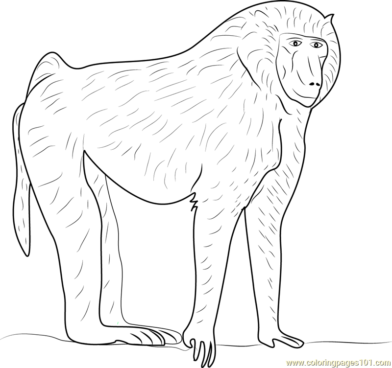 Baboon coloring #11, Download drawings