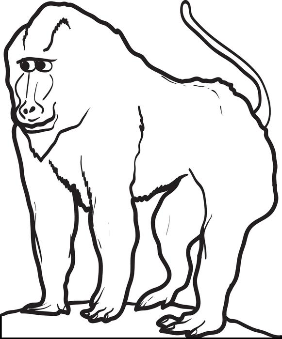 Baboon coloring #2, Download drawings
