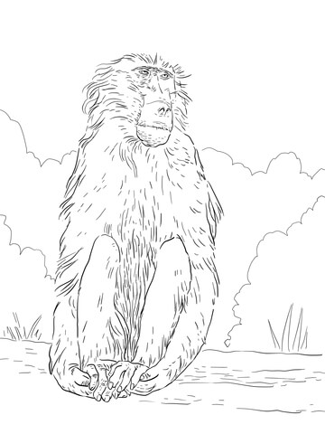 Baboon coloring #17, Download drawings