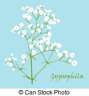 Baby's Breath clipart #14, Download drawings