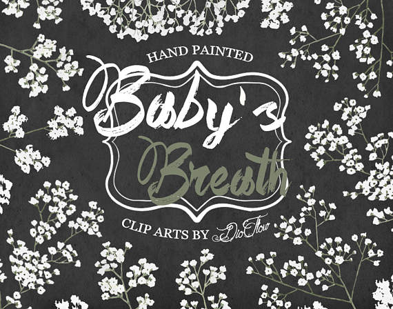 Baby's Breath clipart #13, Download drawings