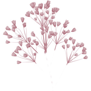Baby's Breath clipart #6, Download drawings