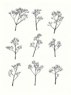 Baby's Breath clipart #7, Download drawings