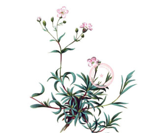 Baby's Breath clipart #15, Download drawings