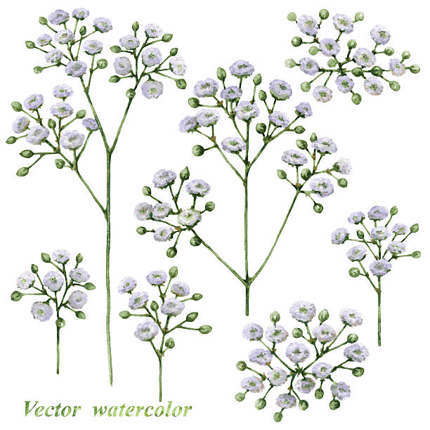 Baby's Breath clipart #16, Download drawings