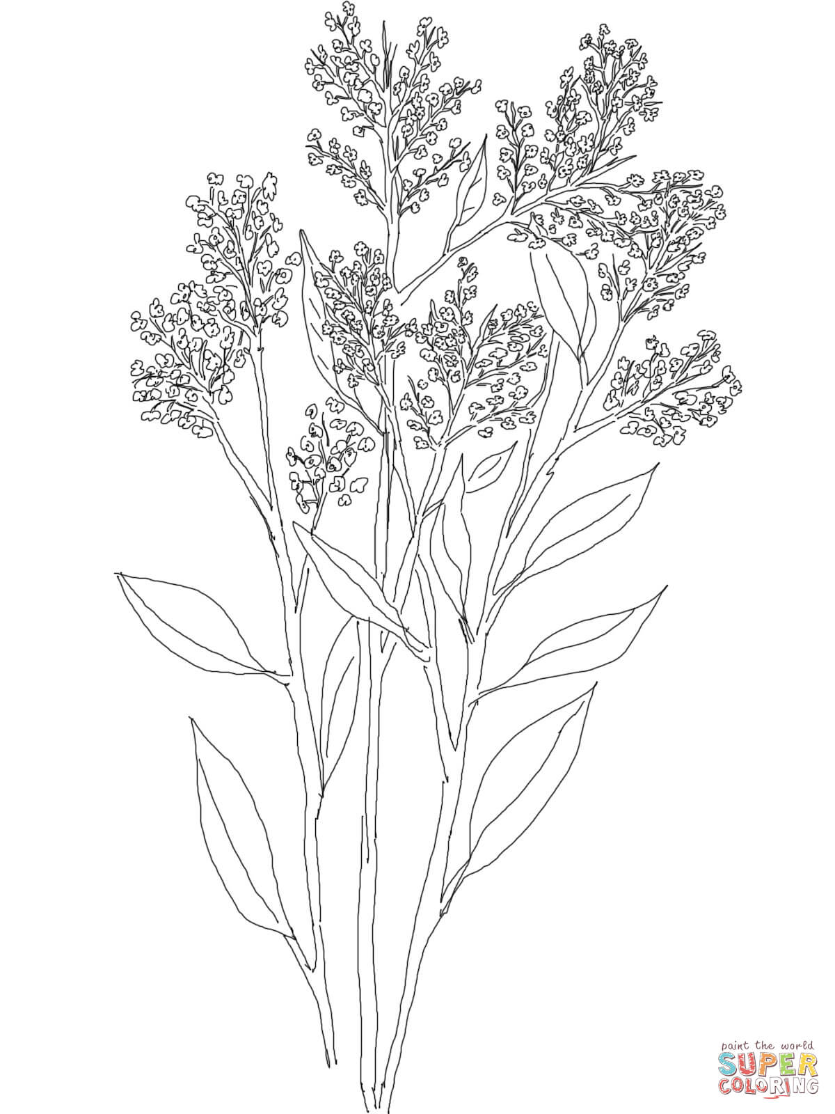 Baby's Breath coloring #14, Download drawings