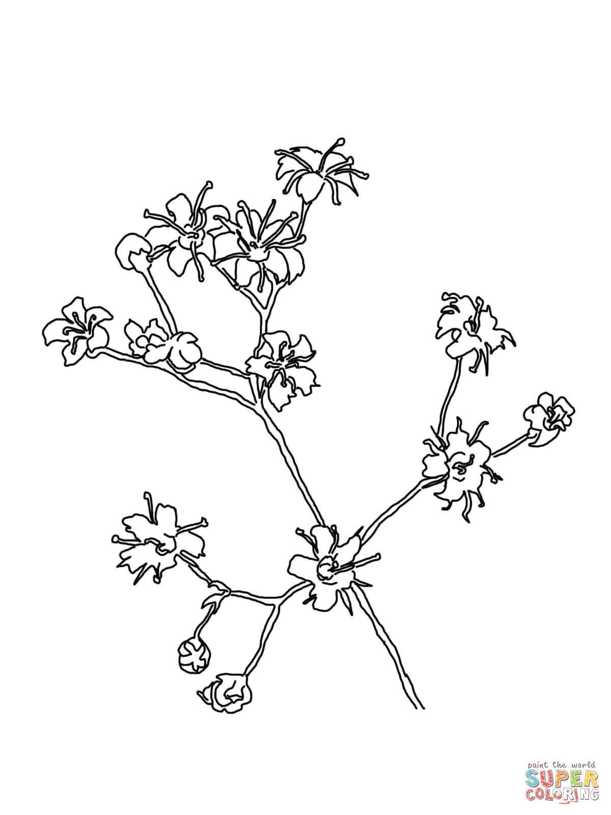 Baby's Breath coloring #7, Download drawings