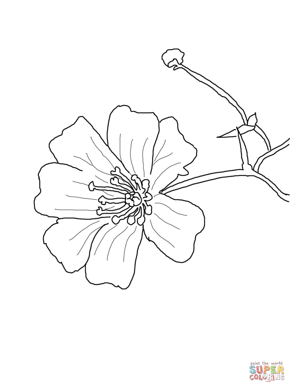 Baby's Breath coloring #8, Download drawings