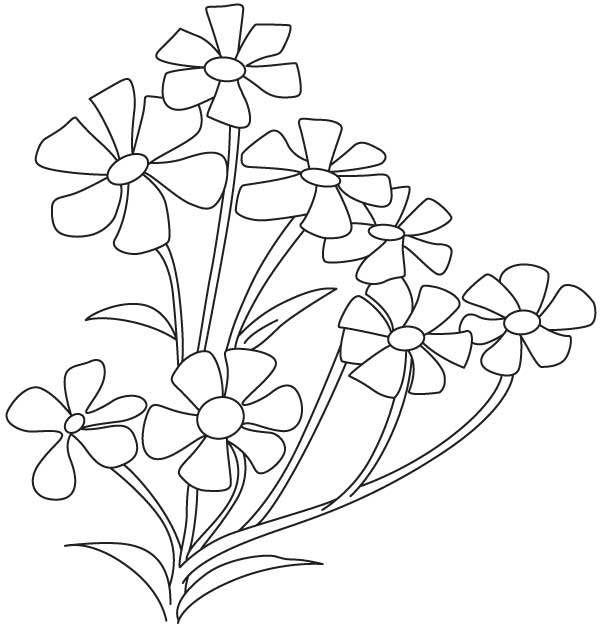 Baby's Breath coloring #12, Download drawings