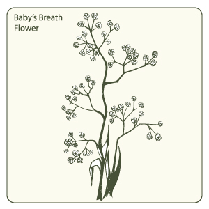 Baby's Breath coloring #19, Download drawings