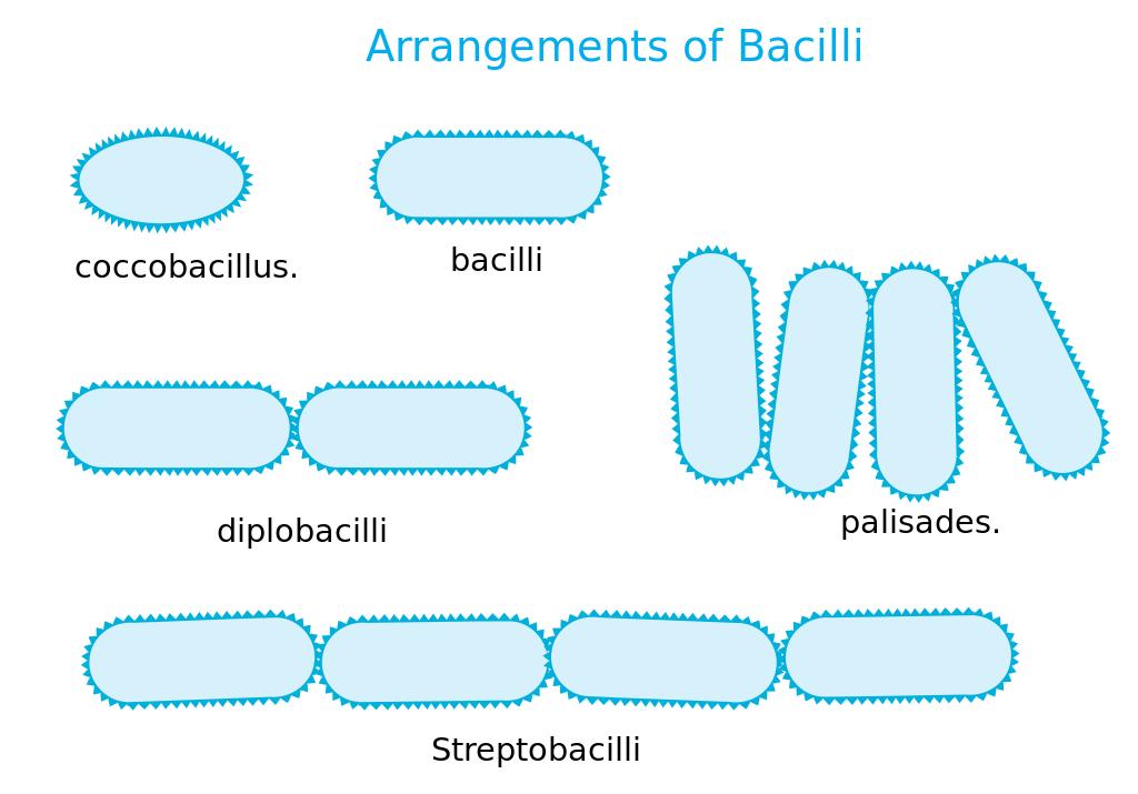 Bacteria svg #17, Download drawings