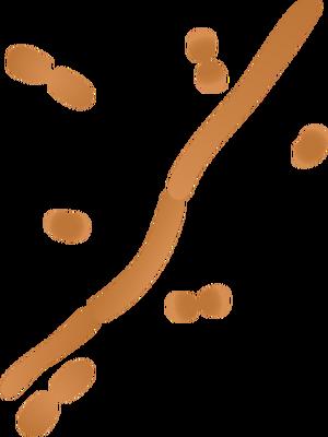Bacteria svg #6, Download drawings