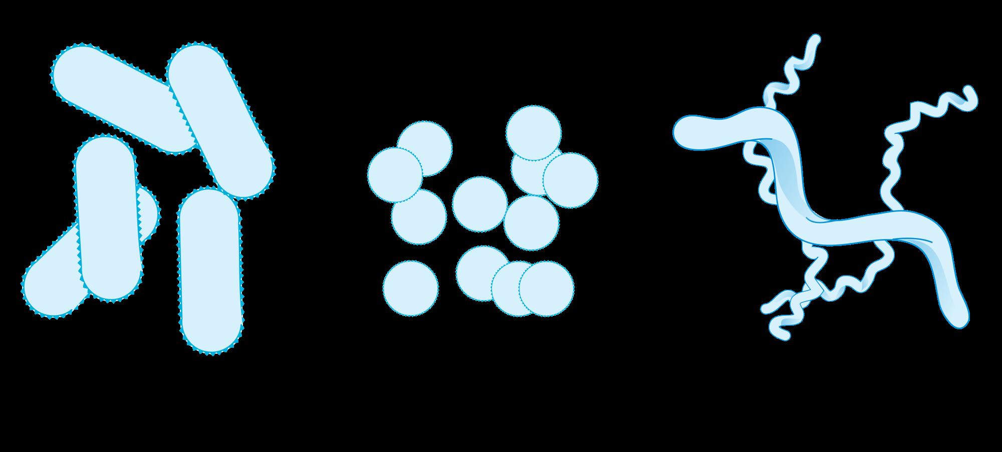 Bacteria svg #13, Download drawings