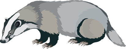 Badger clipart #16, Download drawings