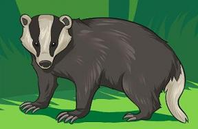 Badger clipart #1, Download drawings