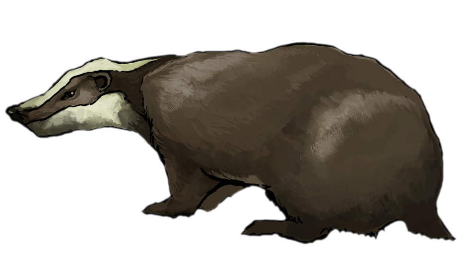 Badger clipart #11, Download drawings