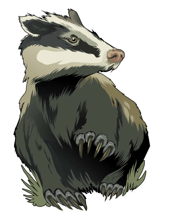Badger clipart #10, Download drawings