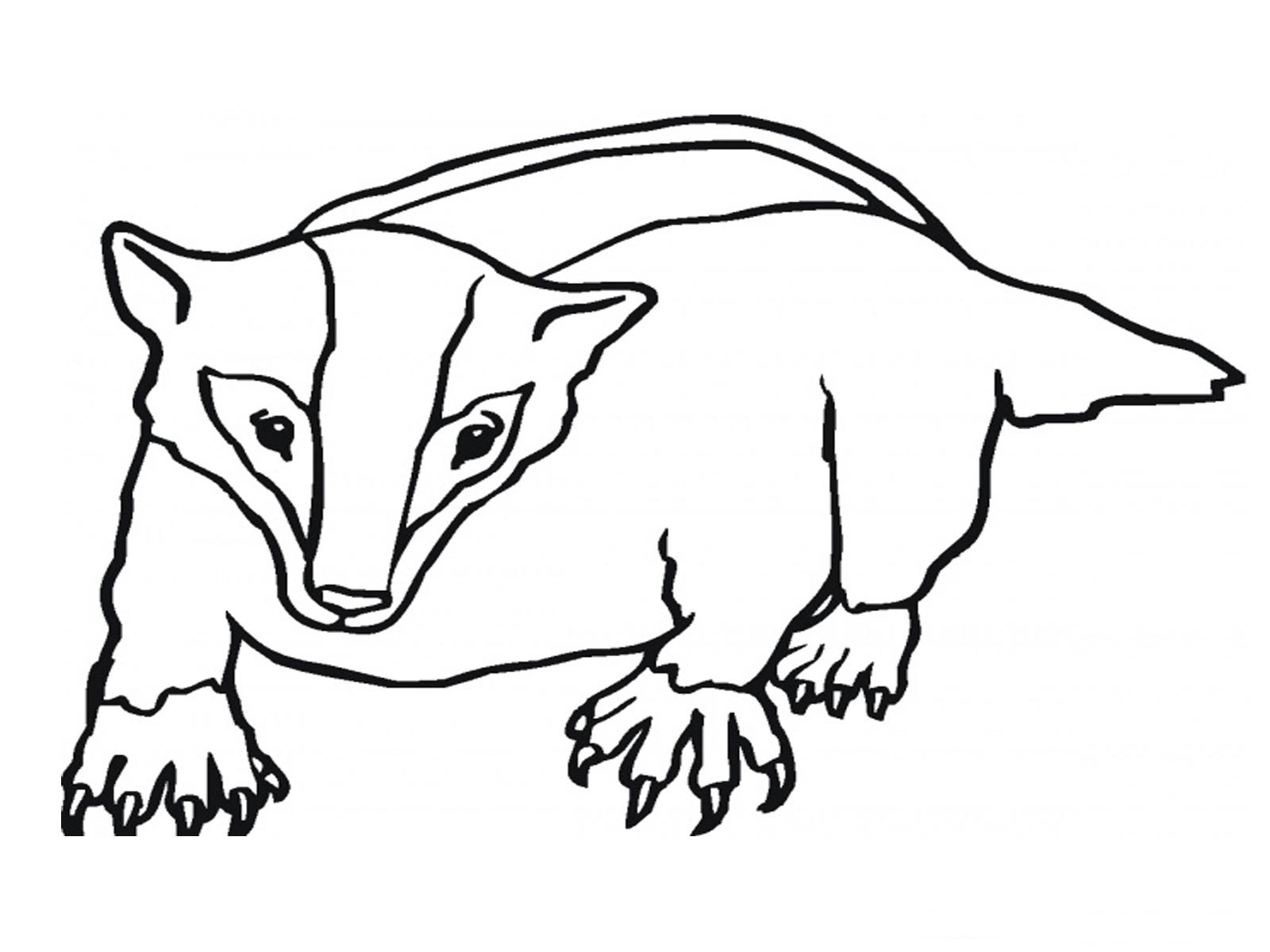 Badger coloring #11, Download drawings