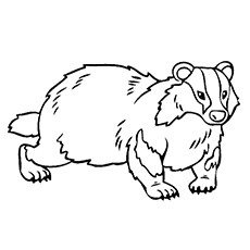 Badger coloring #2, Download drawings