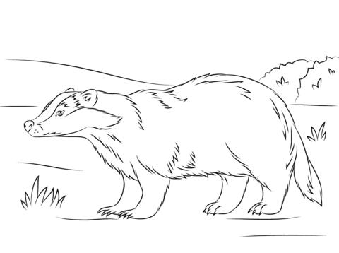 Honey Badger coloring #8, Download drawings
