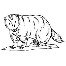 Honey Badger coloring #14, Download drawings